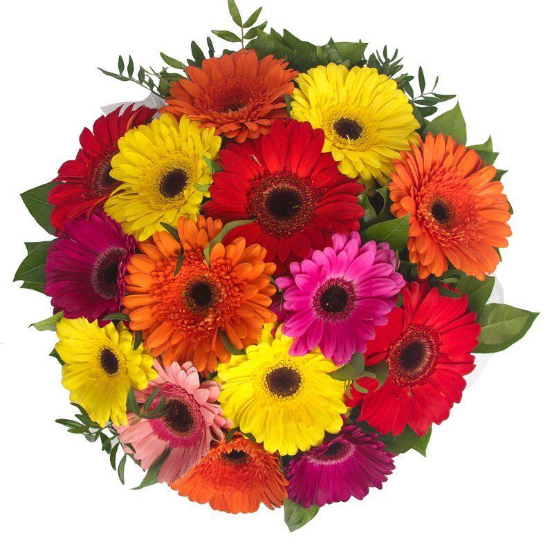 Купить цветы герберы в новосибирске